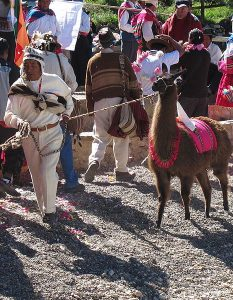 Aymara ceremony in Copacabana, Bolivia. (Wikipedia)