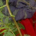 Detail of clothing on body of Fartun Omar, murdered aunt of kidnapped boy. (Morning Star News photo)