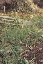 Grave of Pastor Robert Bakulubanywa..(Morning Star News)