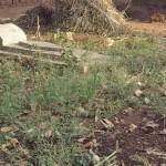 Grave of Pastor Robert Bakulubanywa. (Morning Star News)