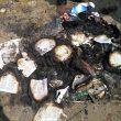 Ferocity of Hindu Extremist Attacks Stuns Christians in Tamil Nadu, India